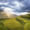 Điều kiện chuyển nhượng đất trồng lúa