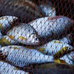 Sử dụng ngư cụ bị cấm khi khai thác thủy sản