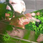 Các vi phạm liên quan đến phòng chống dịch bệnh động vật trên cạn