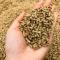 Giấy phép đủ điều kiện sản xuất thức ăn chăn nuôi