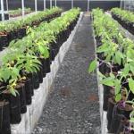 Thủ tục cấp Giấy phép nhập khẩu giống cây trồng