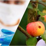 Vi phạm về kiểm dịch thực vật xuất nhập khẩu và quá cảnh