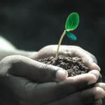 Thủ tục cấp Quyết định công nhận lưu hành giống cây trồng