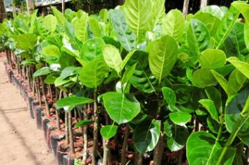 Nhập khẩu giống cây trồng từ nước ngoài về Việt Nam để buôn bán