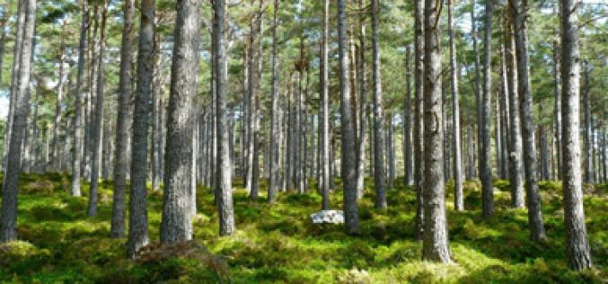 Thủ tục giao thuê đất rừng cho hộ gia đình, cá nhân