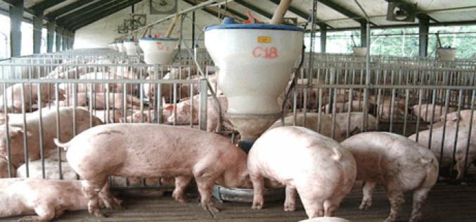 Xử phạt vi phạm hành chính về quản lý chất thải chăn nuôi