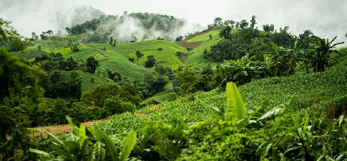 Thủ tục giao thuê đất rừng cho doanh nghiệp
